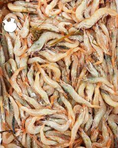 pesce fresco fiumicino